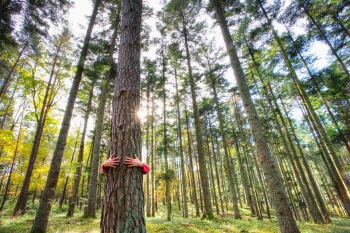 ISO 14001 und SDG: Umweltmanagement DQS